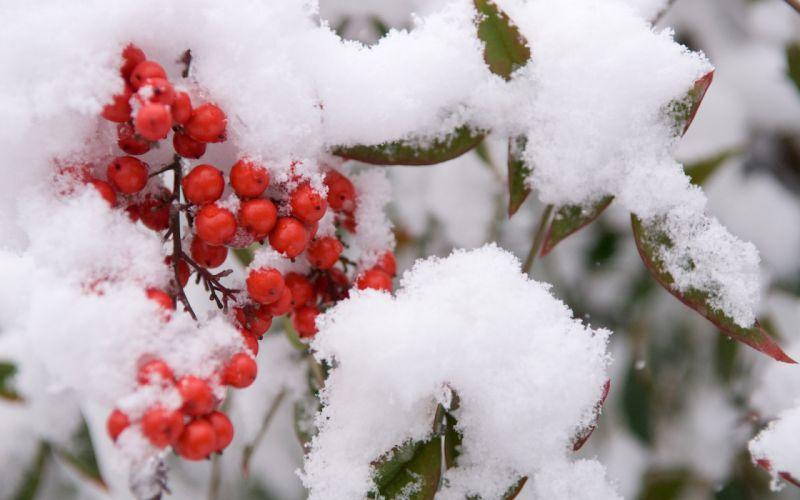 Japan nature winter snow garden wallpaper