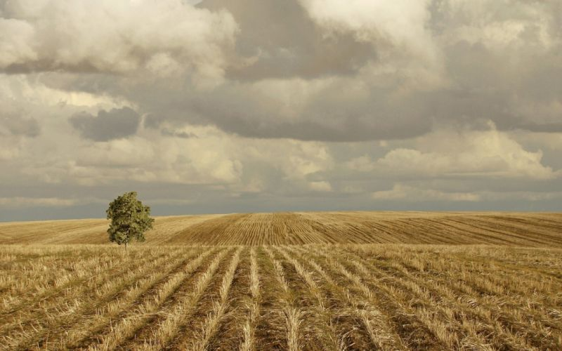 landscapes nature fields wheat lonely wallpaper