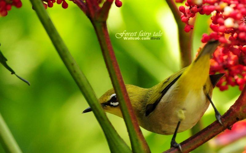 birds animals wallpaper
