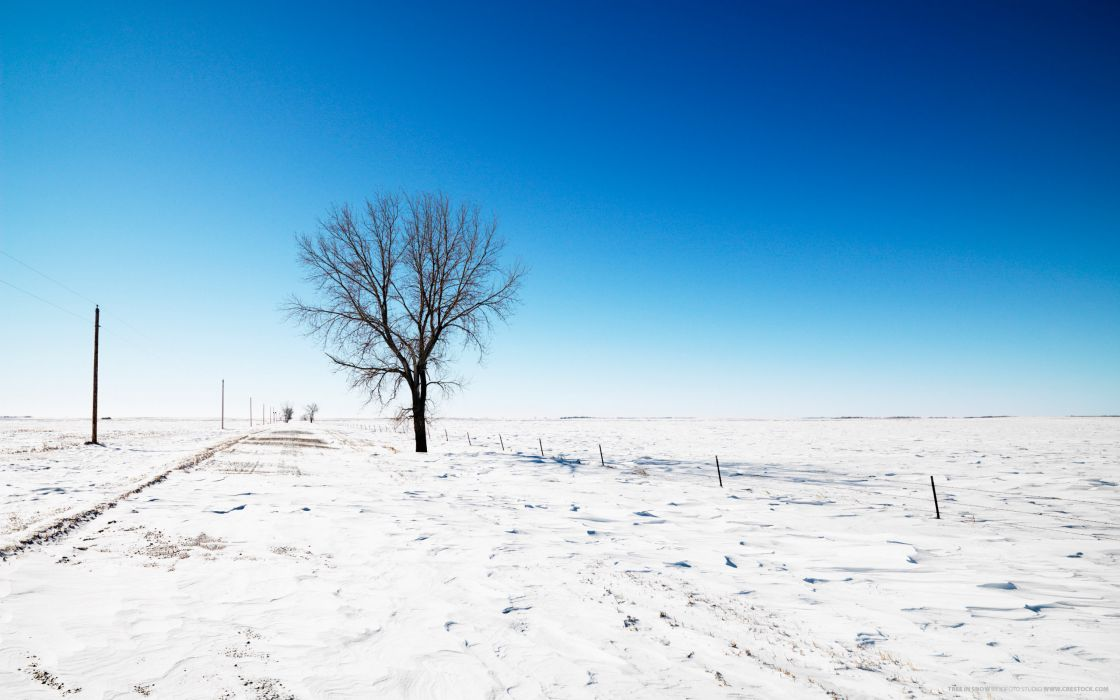 nature winter snow trees fields wallpaper