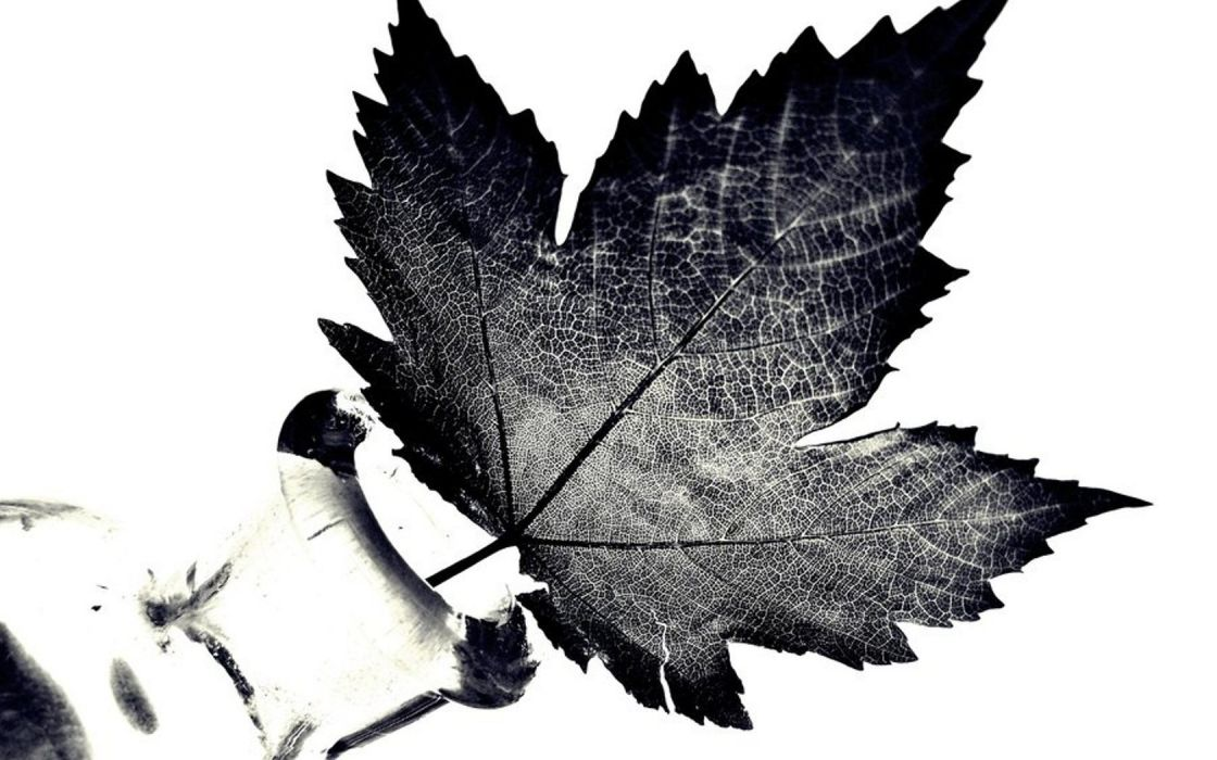 nature feathers monochrome wallpaper