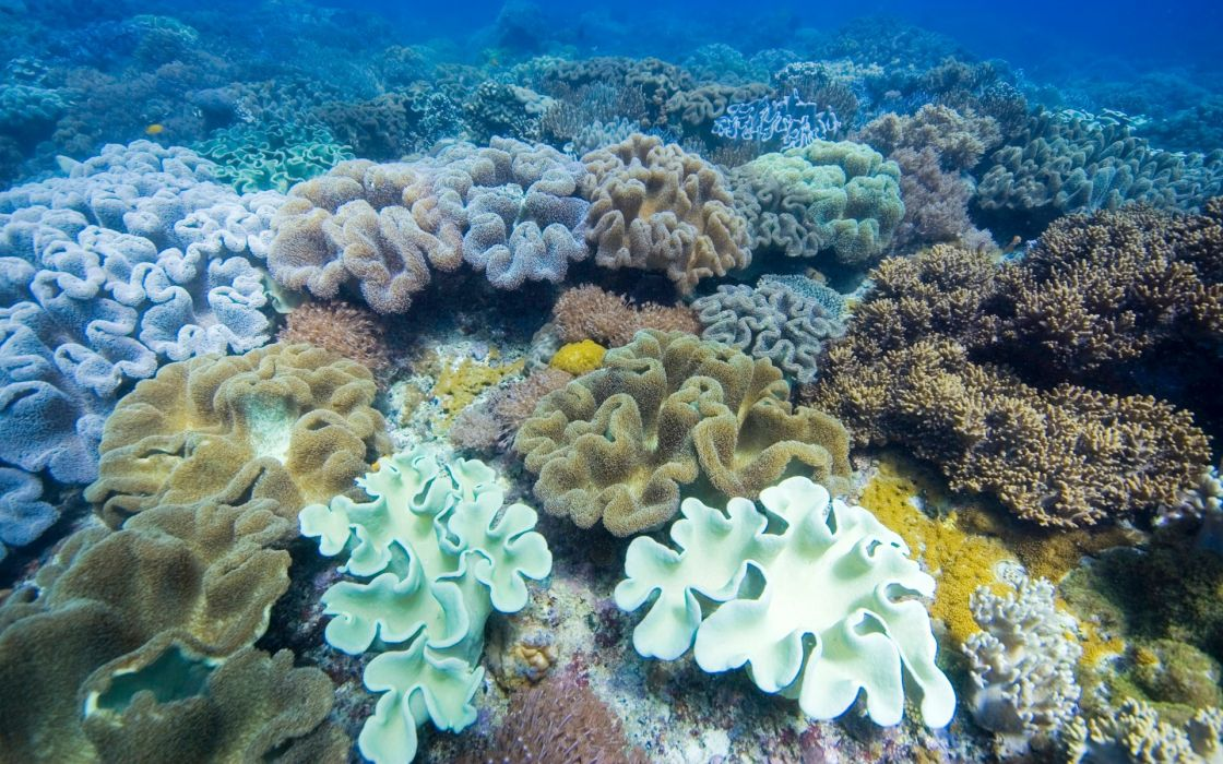 Ocean coral reefs wallpaper 1920x1200 186967 wallpaperup - Sea coral wallpaper ...