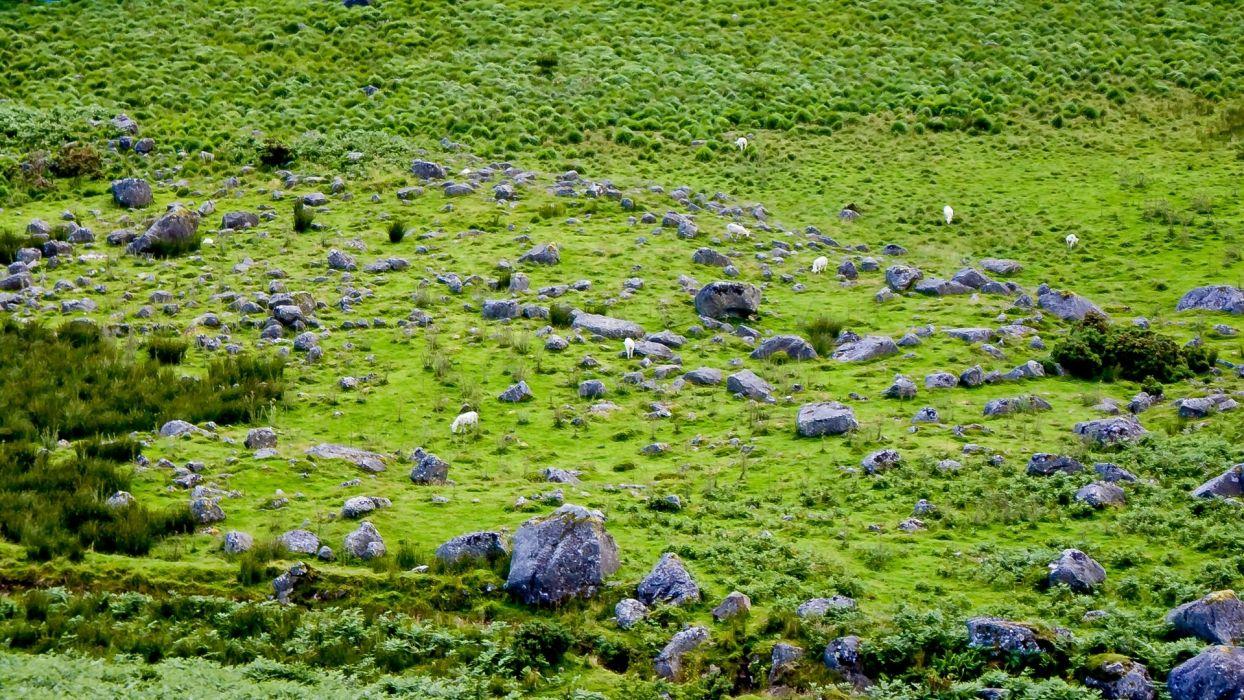 green nature England grass rocks wallpaper