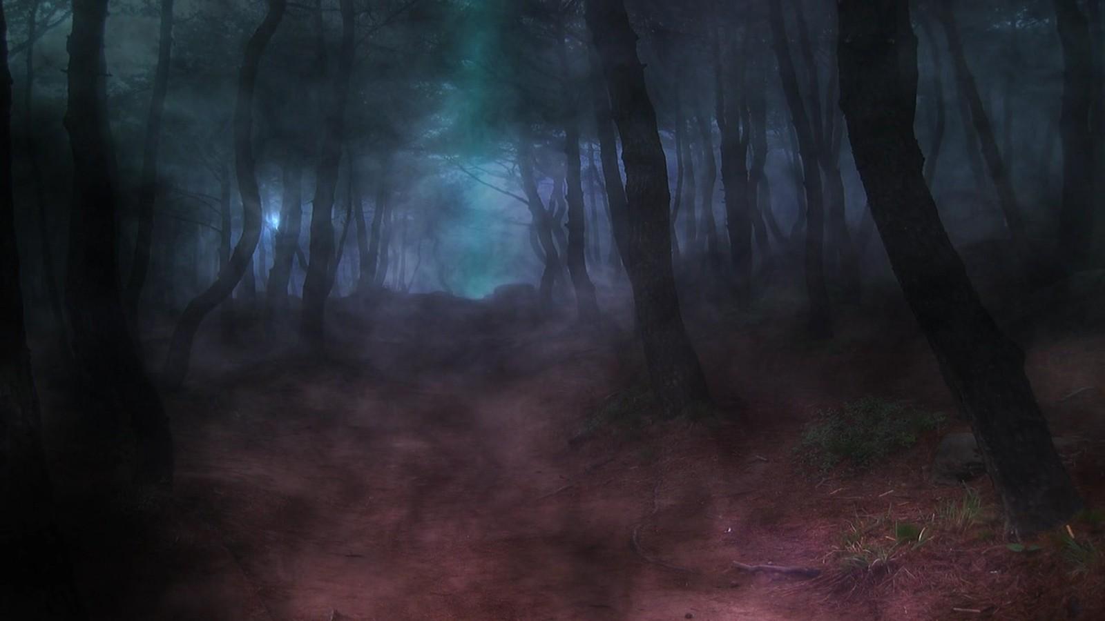 Dark Wood Forests Paths Wallpaper