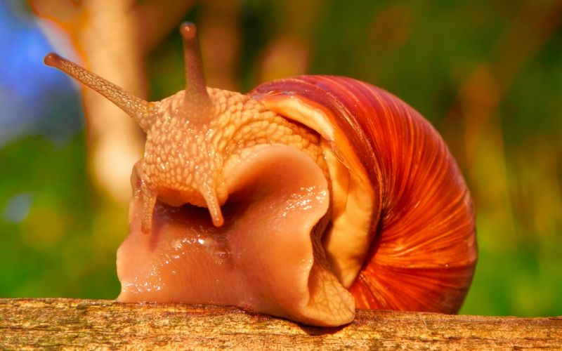 snails wallpaper