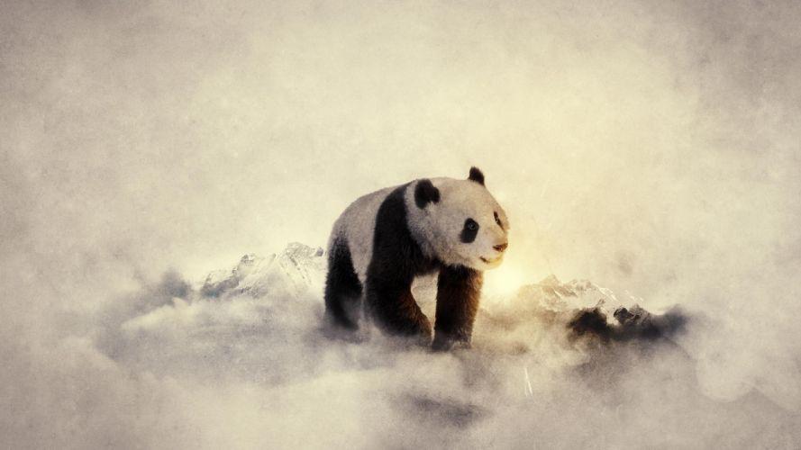 black and white winter snow animals cold panda bears widescreen wallpaper