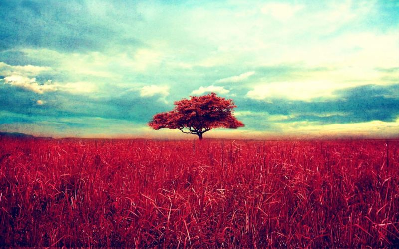 nature trees red fields photo manipulation wallpaper