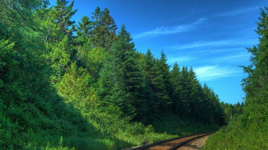trees forests railroads wallpaper