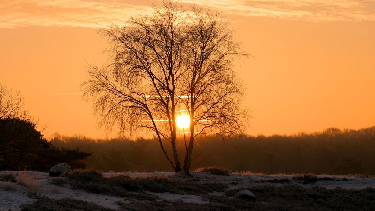 sunset landscapes Sun trees wallpaper