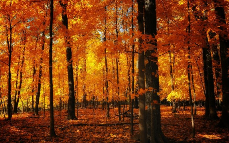 autumn forests wallpaper