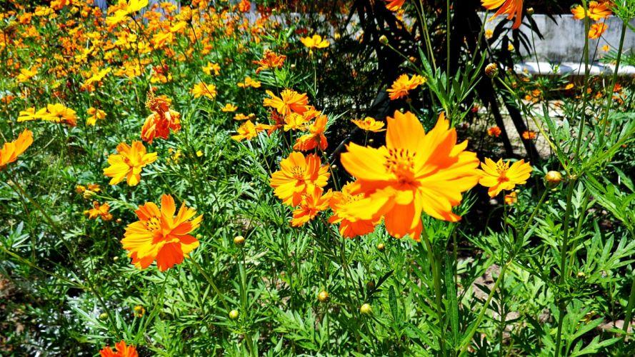 nature flowers sunlight wallpaper