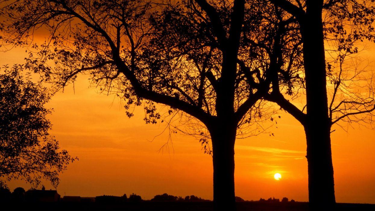 sunset nature trees Illinois wallpaper