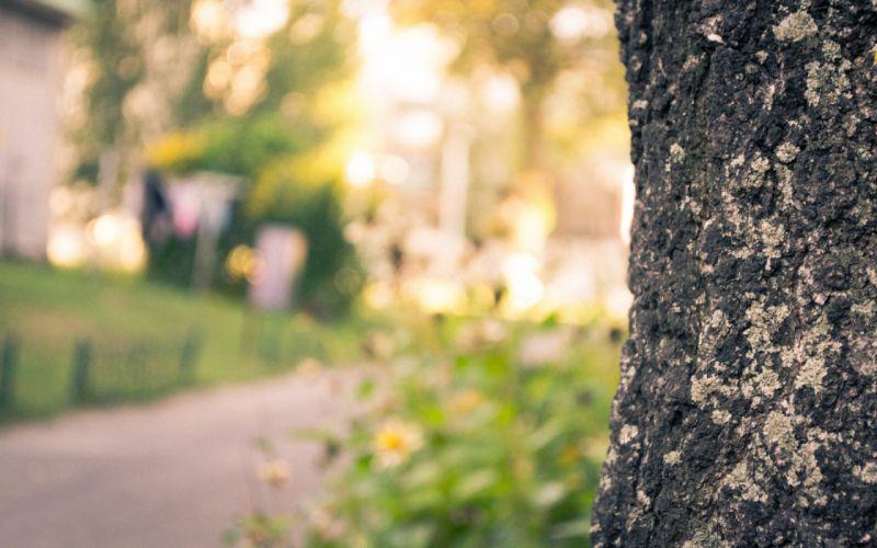 nature trees macro wallpaper