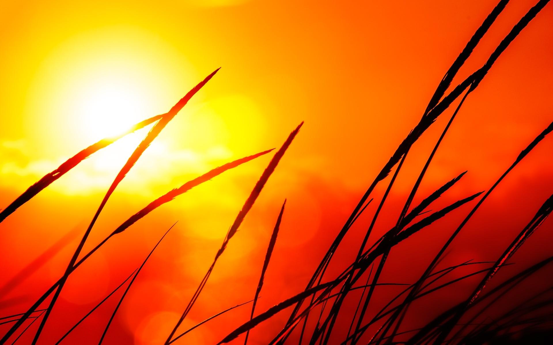 nature sun silhouettes golden plants sunlight wallpaper