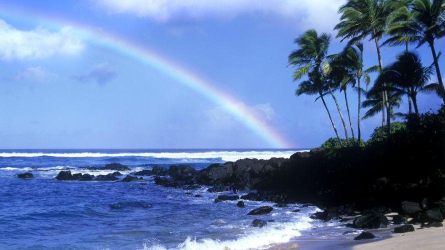 water coast rainbows palm trees wallpaper