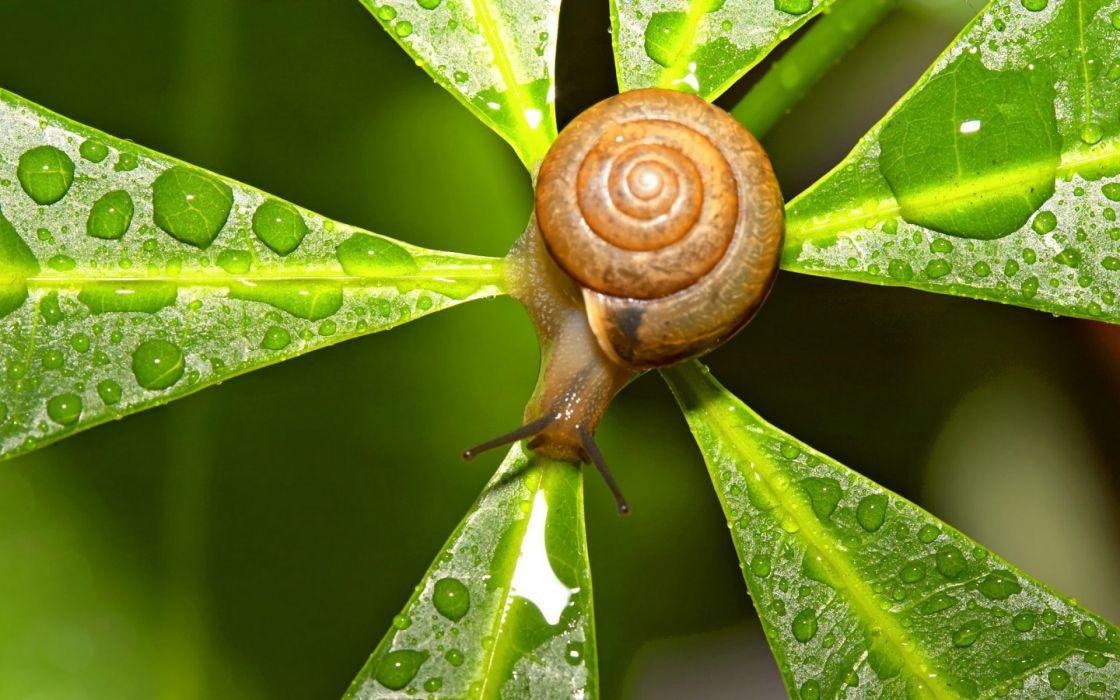 nature snails water drops macro depth of field wallpaper