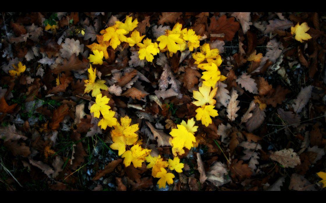 love flowers leaves hearts wallpaper