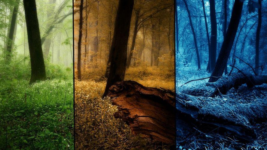 nature winter trees autumn seasons summer wallpaper