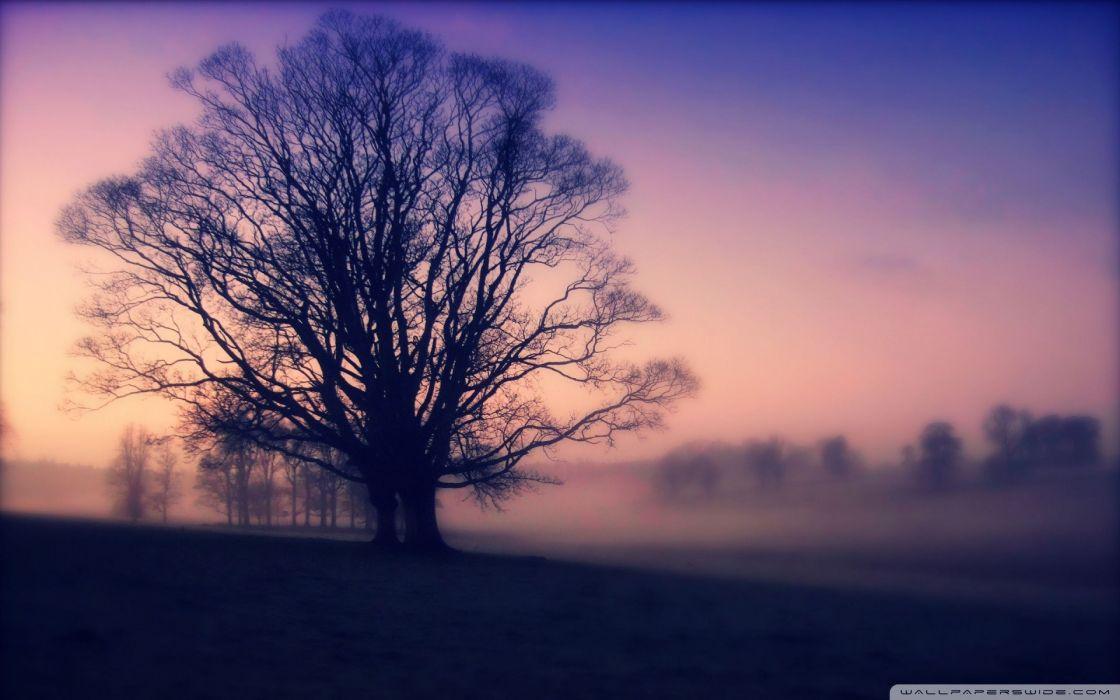 nature trees purple mist wallpaper