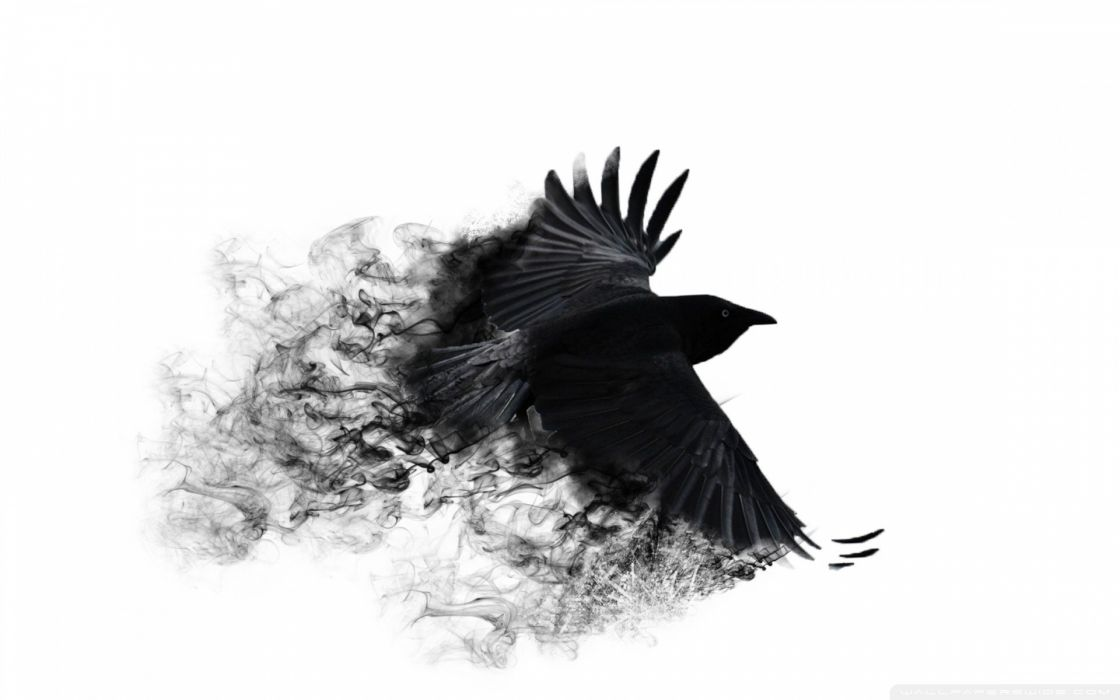 minimalistic crows white background wallpaper