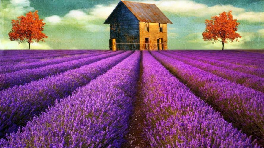 fields digital art lavender old house wallpaper