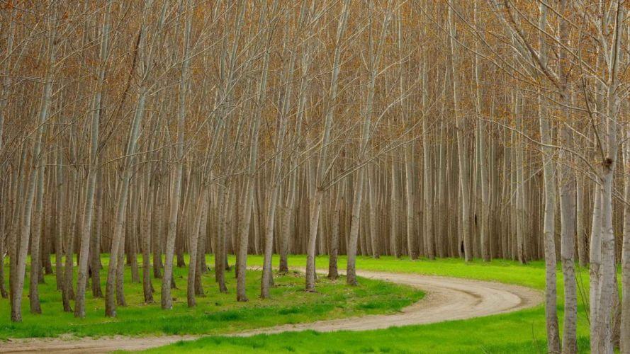 trees Hybrid Oregon wallpaper