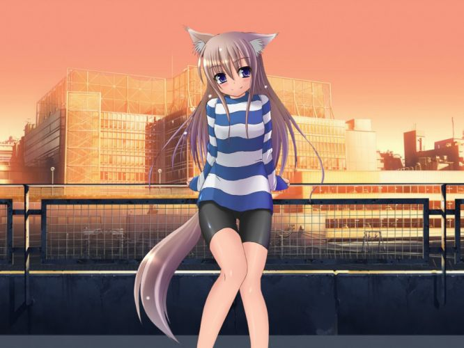 tails nekomimi anime girls wallpaper