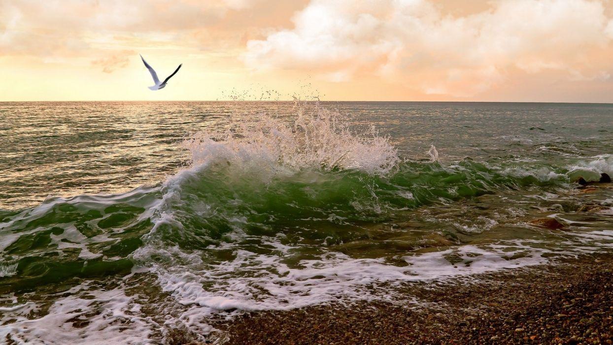 ocean landscapes nature waves seagulls sea shorelines sea beaches wallpaper