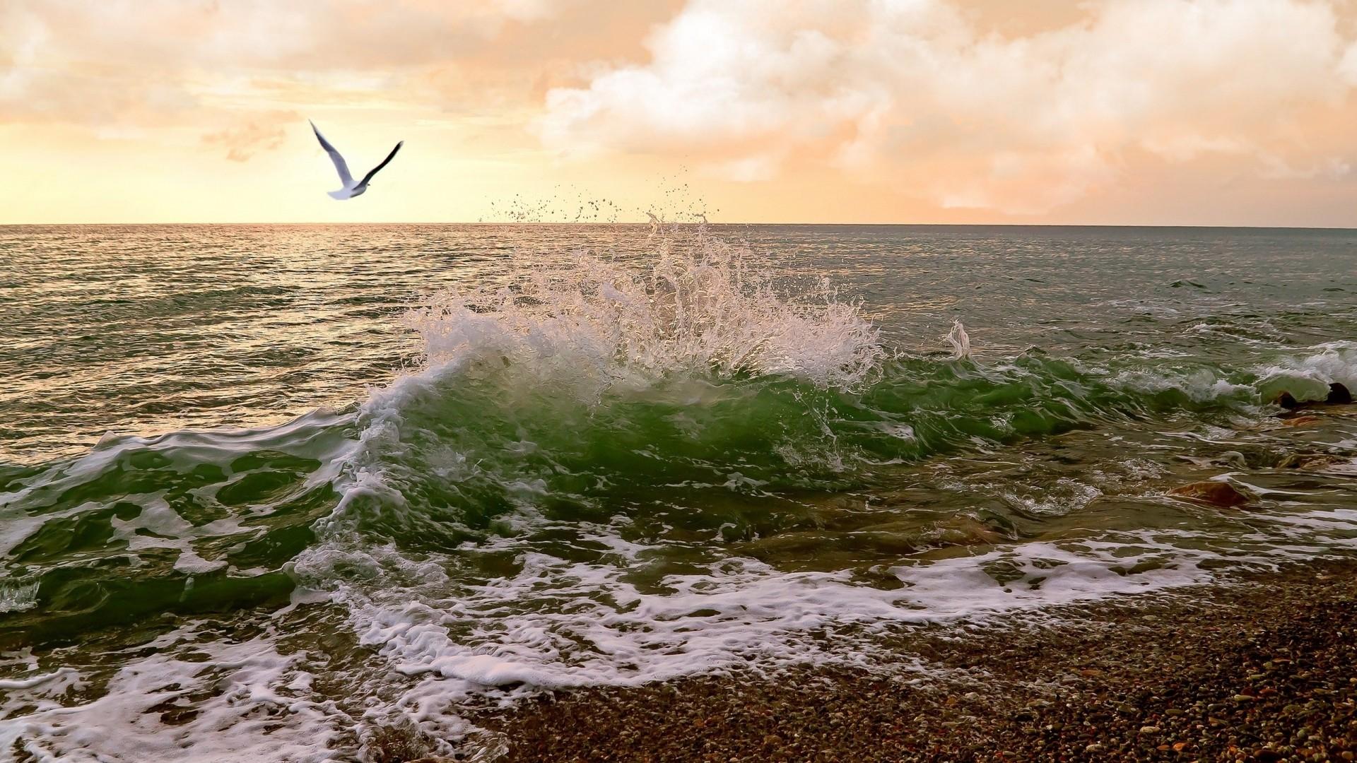 rough, sea, seagulls, waves - image #485450 on Favim.com