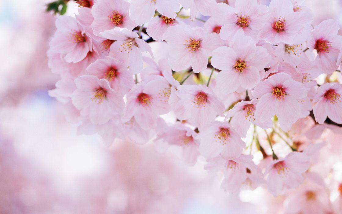 flowers blossoms macro wallpaper