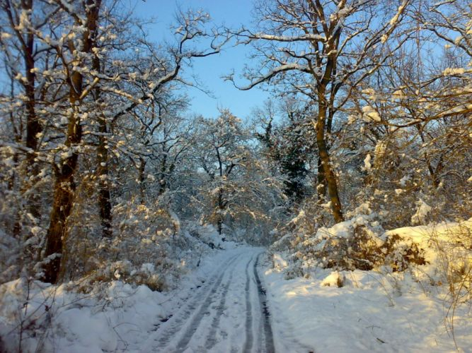 nature winter snow trees white forests wallpaper