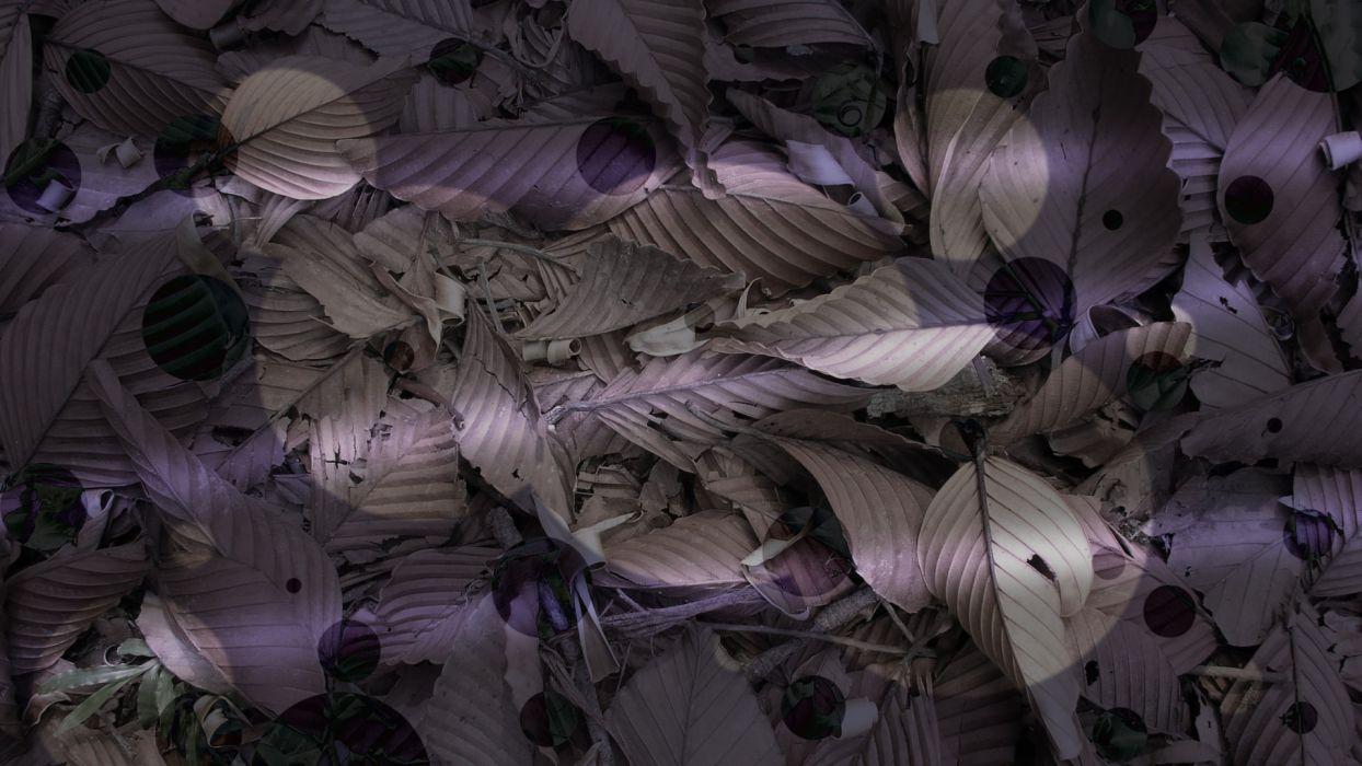 nature leaves purple plants wallpaper