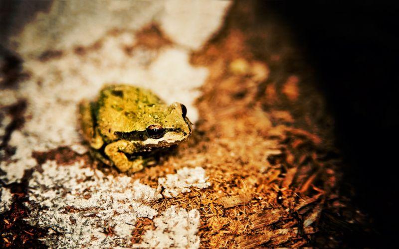 nature frogs bokeh depth of field amphibians Ed McGowan wallpaper