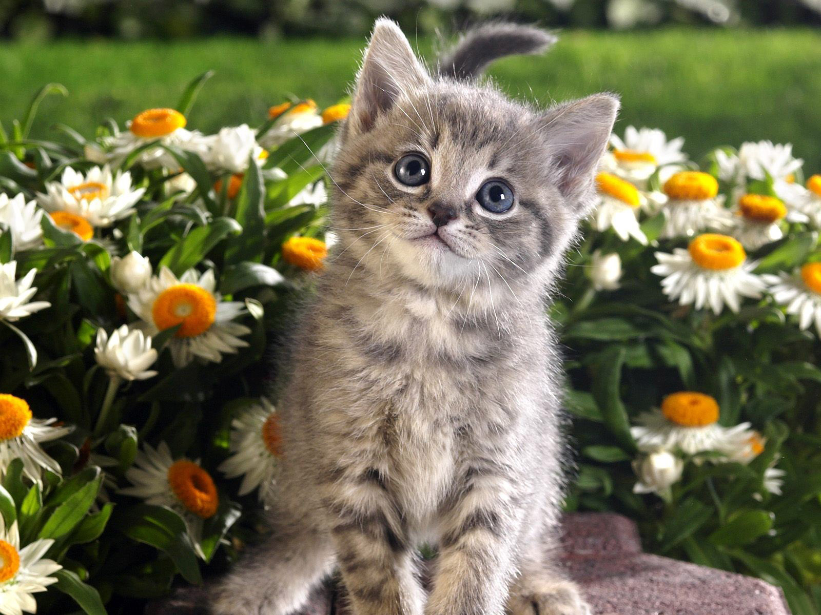 Kittens And Flowers Wallpaper Flowers Cats Animals Kittens