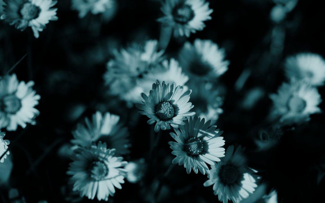dark flowers monochrome wallpaper
