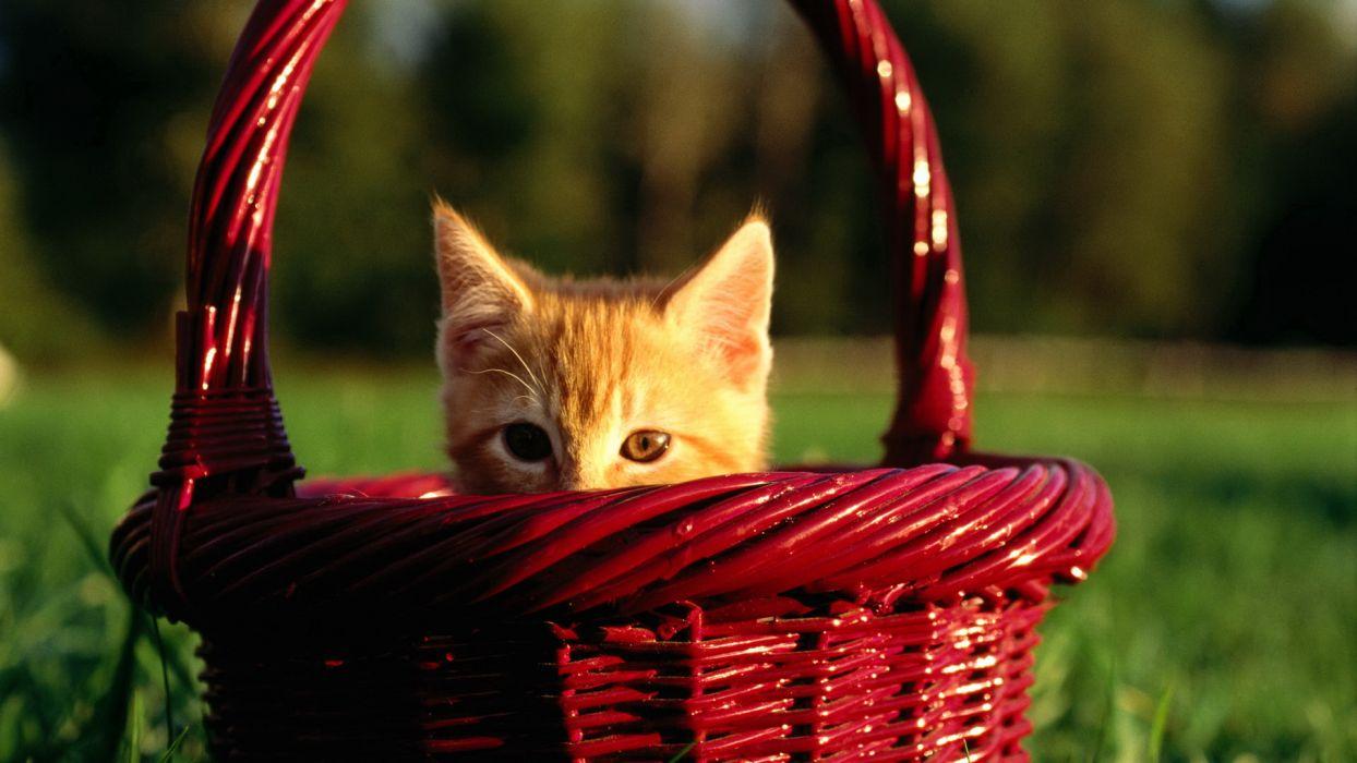 cats baskets wallpaper