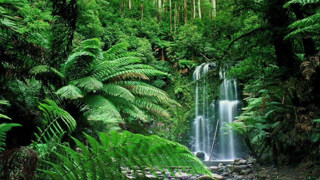 Nature Forests Australia Waterfalls Victoria Australia