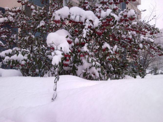 winter Istanbul wallpaper