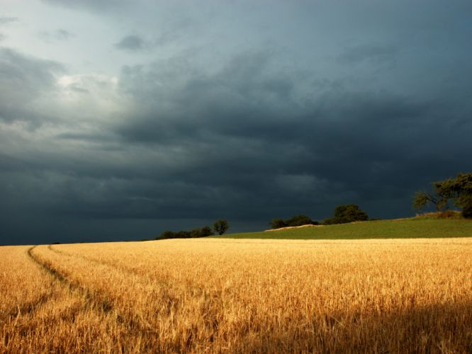 clouds landscapes nature trees fields overcast tire tracks under the storm wallpaper