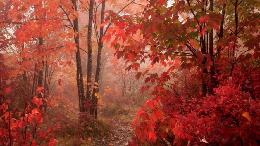 autumn parkway foliage North Carolina wallpaper