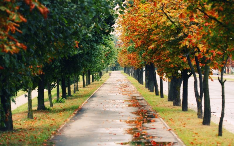 landscapes nature autumn forests paths roads wallpaper