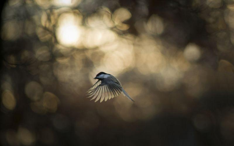 nature birds animals wallpaper