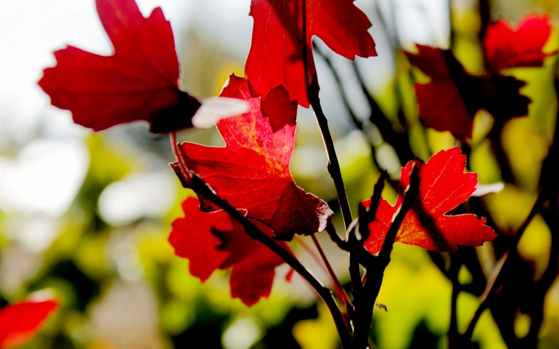 autumn leaves blurred background wallpaper