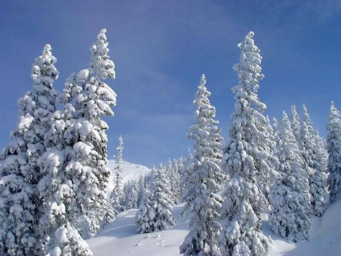 landscapes nature winter snow trees skylines wallpaper