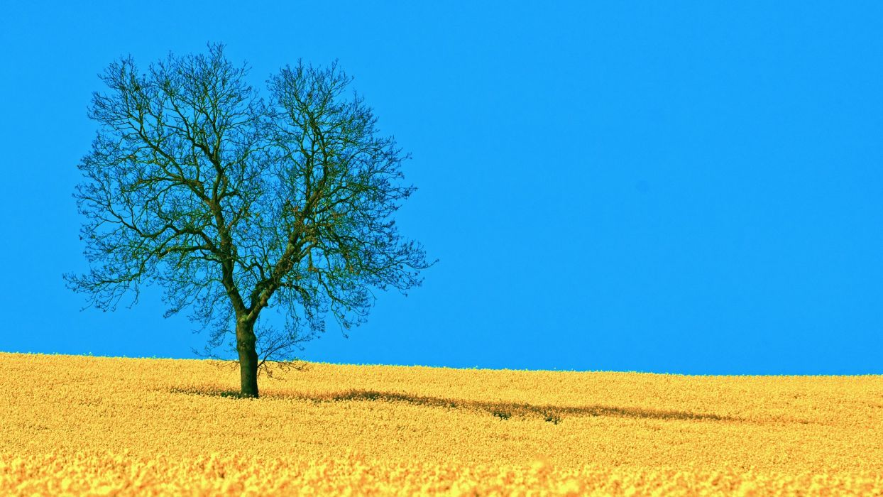 landscapes nature horizon trees blue skies lone tree wallpaper