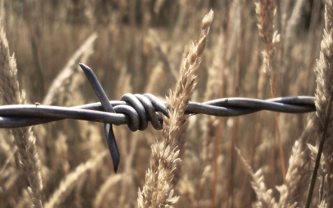wheat barbed wire wallpaper