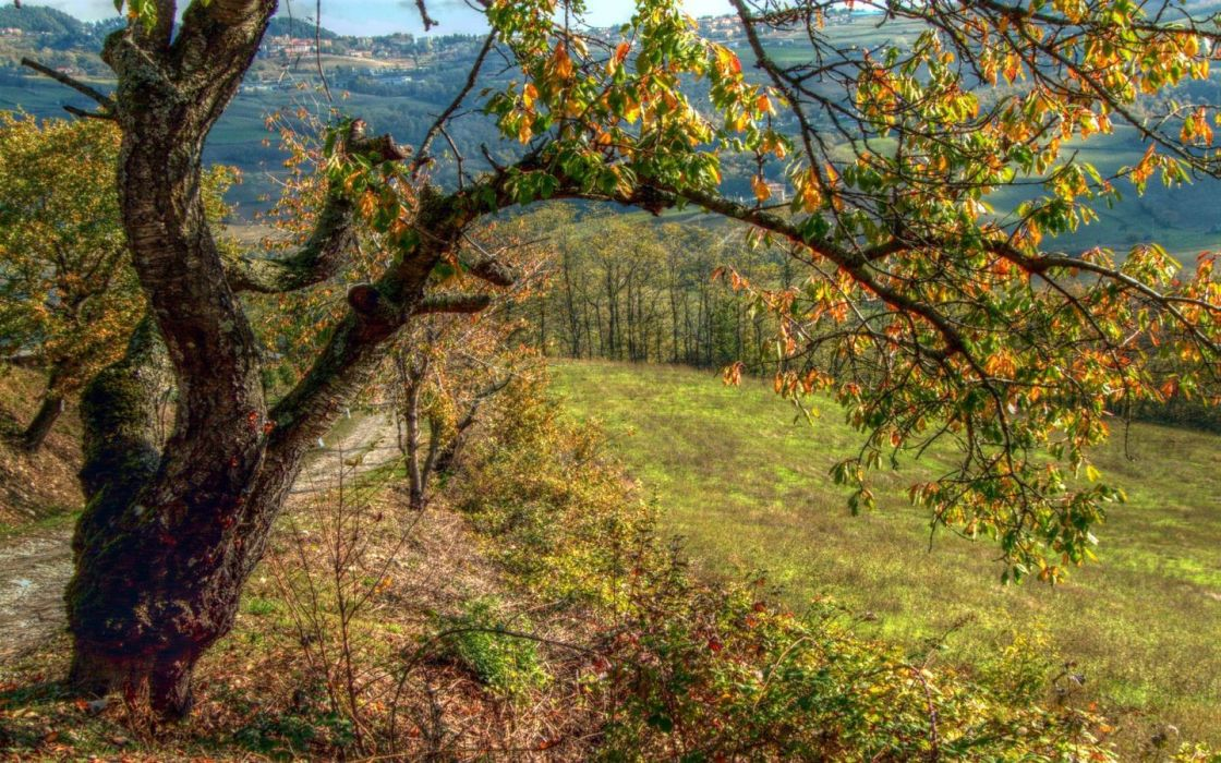 landscapes nature trees autumn leaves HDR photography wallpaper