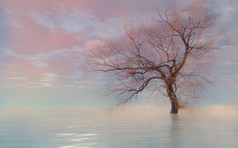 water nature trees skyscapes wallpaper