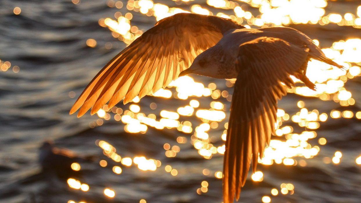 water flying birds wallpaper