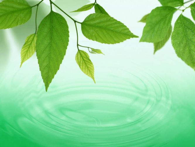 green nature leaves plants wallpaper